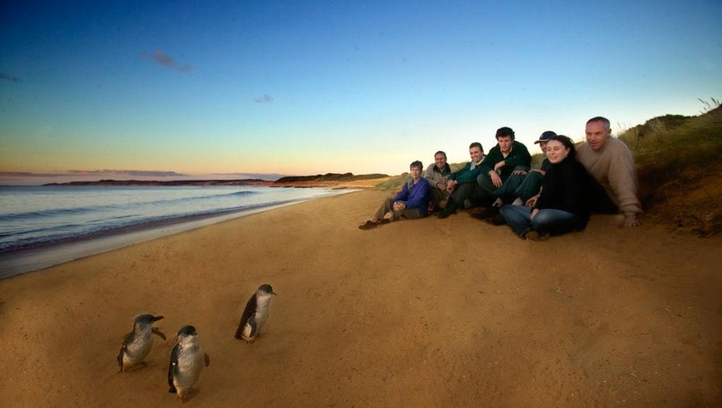 企鹅岛 Phillip Island