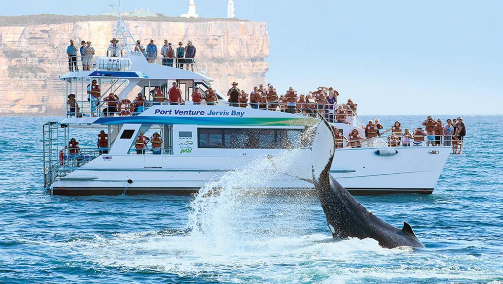 杰维斯湾观海豚一日游
